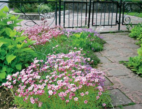 Vrtova v Žireh